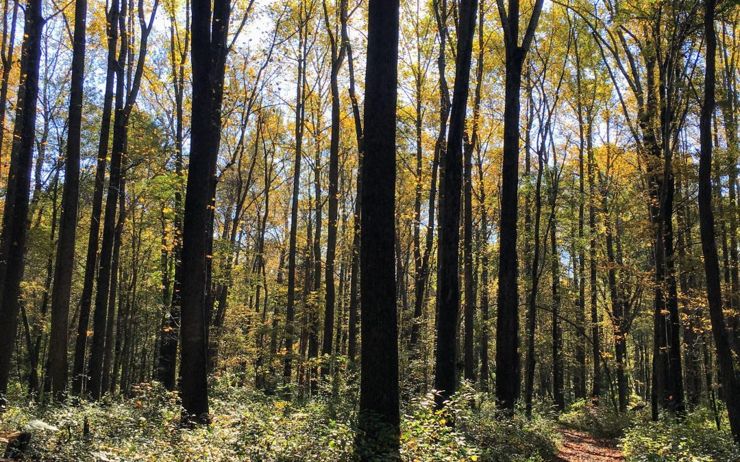 Naturalist Walk